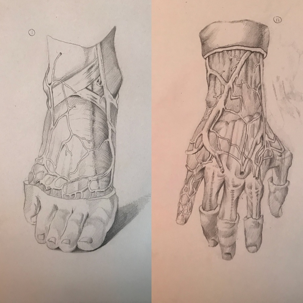 Science Portfolio - The Portfolio of Artist Olivia Ortega